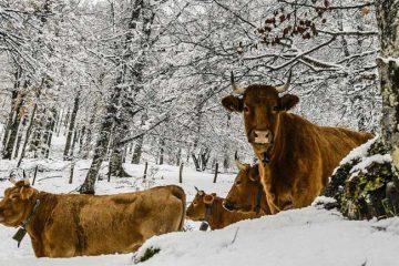 sneeuw-in-nederland