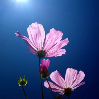 de-magie-van-bloemen