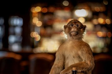 monkey-47-gin-is-perfect-voor-cocktails-en-gin-tonic