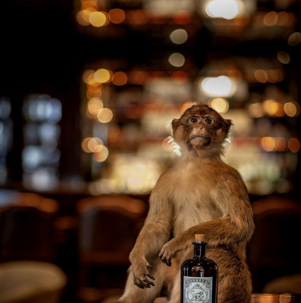 monkey-47-gin-is-perfect-voor-cocktails-en-gin-tonic
