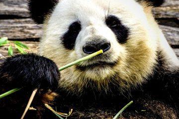bamboe-ondergoed-alle-voordelen-op-een-rij