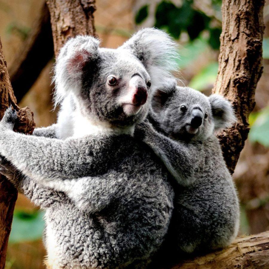 zo-krijg-je-zin-om-naar-australie-af-te-reizen