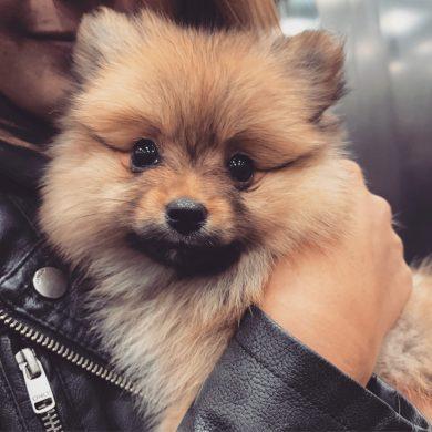 hulp-bij-een-eerste-puppy
