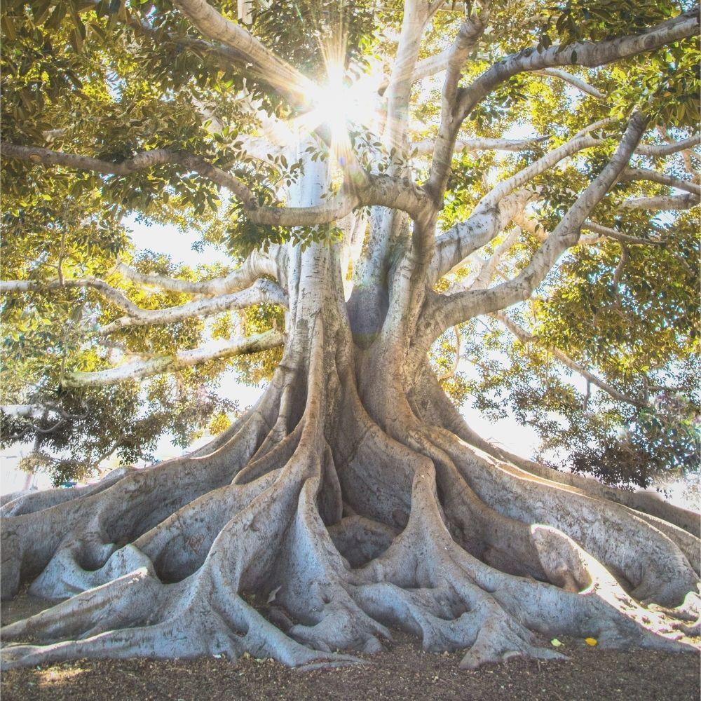 verrijk-je-tuin-met-deze-bijzondere-bomen