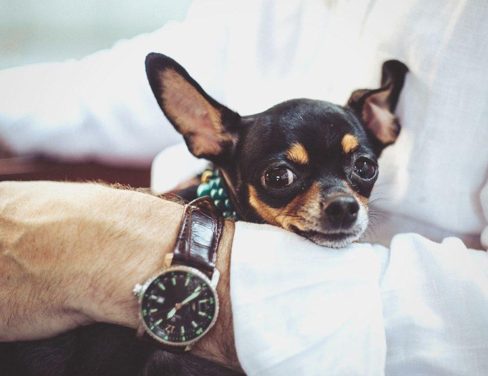 bach-bloesem-oplossing-voor-blaffende-hond